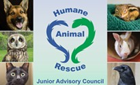 Become a member of the Junior Advisory Council