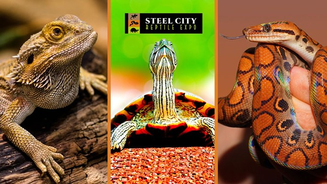 Snakes and Turtles and Lizards, Oh My!
