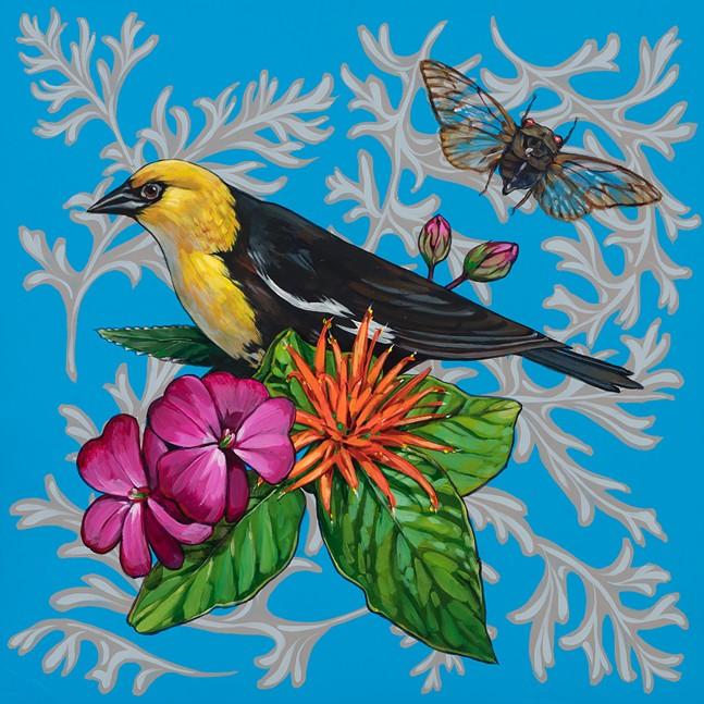 yellowheaded_blackbird_on_blue_courtesy_of_ashley_cecil.jpg