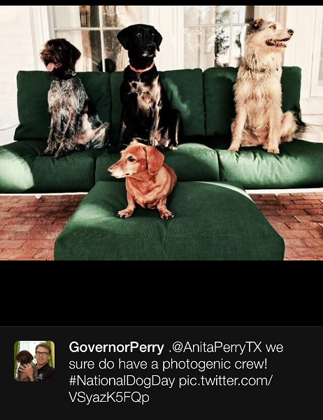 tweet_perry_dog.png