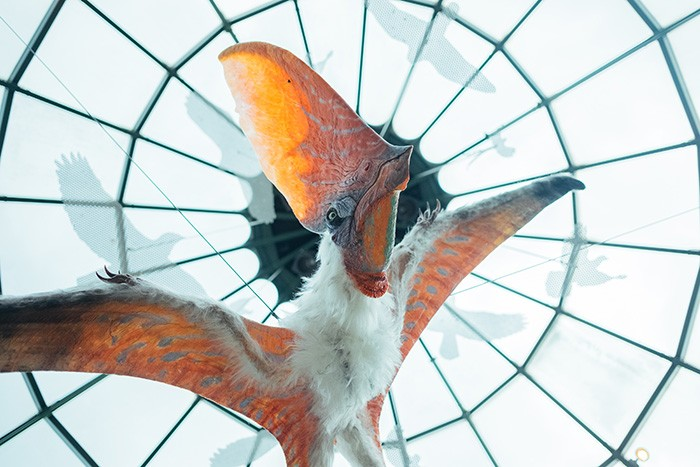 A model of a species of Pterosaurs hangs from the ceiling of the National Aviary - CP PHOTO: JARED MURPHY