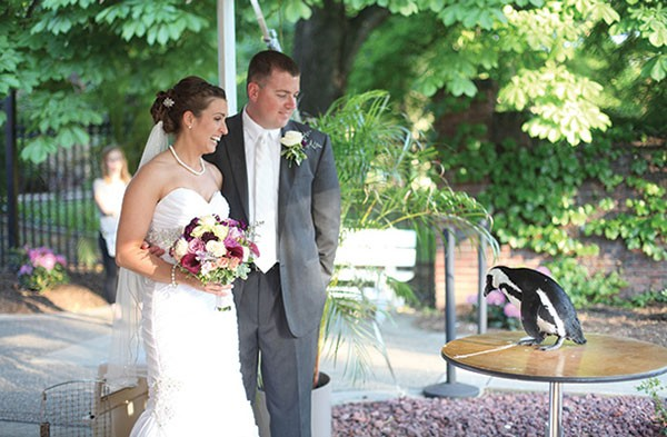 A penguin encounter during a wedding at The National Aviary