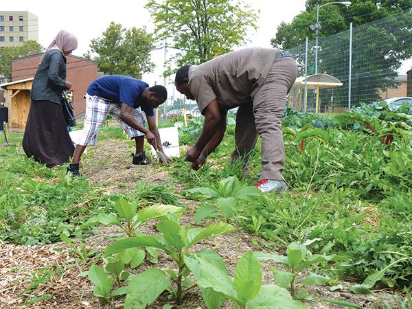 Abdulkadir Chirambo (center) and other members of Pittsburgh's Somali Bantu community weeding the community garden in Northview Heights - CP PHOTO BY RYAN DETO