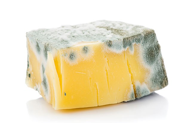Image result for moldy cheese