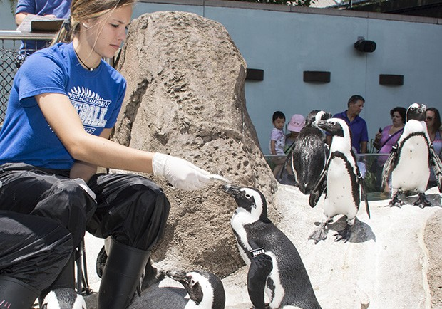 Brooklyn Magill of Ellwood City feeds a penguin at the National Aviary.