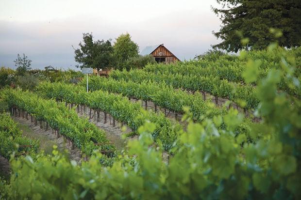 The vineyard at Lynmar Estate - PHOTO COURTESY OF PETE SOERGEL