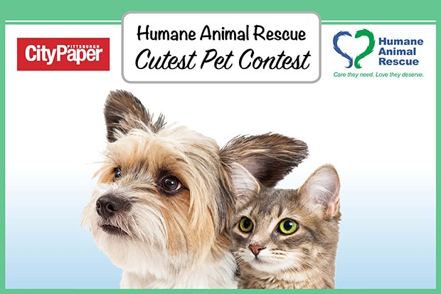 Dogs | Humane Animal Rescue Cutest Pet Contest | Pittsburgh