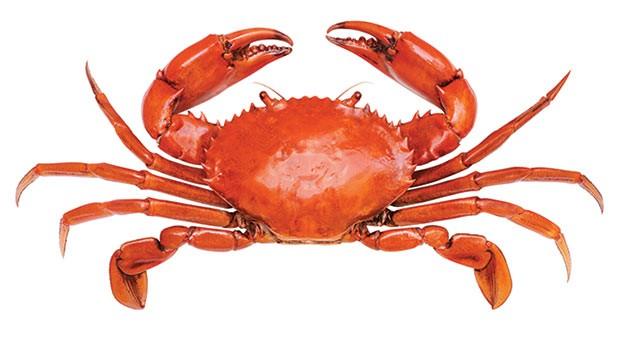 top5_crab_24.jpg