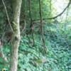 Inside Hays Woods
