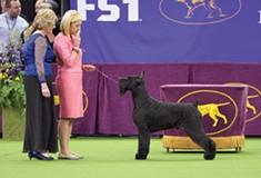 Docuseries <i>7 Days Out</i> explores dog shows, NASA missions, and other major events