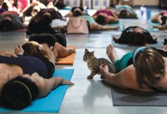 Kitten Yoga, sponsored by Pittsburgh's Animal Friends, is a hands-on adoption tool