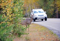 Can you take roadkill home and eat it?