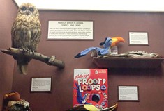 Inside the Hall of Birds at the Carnegie Museum of Natural History