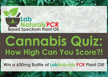 Cannabis Quiz: How High Can You Score?