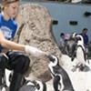 Get up close and personal with this team of penguins at Pittsburgh's National Aviary