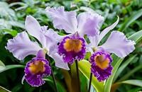 ceb27cfc_orchid_credt_paul_g._wiegman.jpg