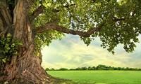 45710b8d_tree.jpg
