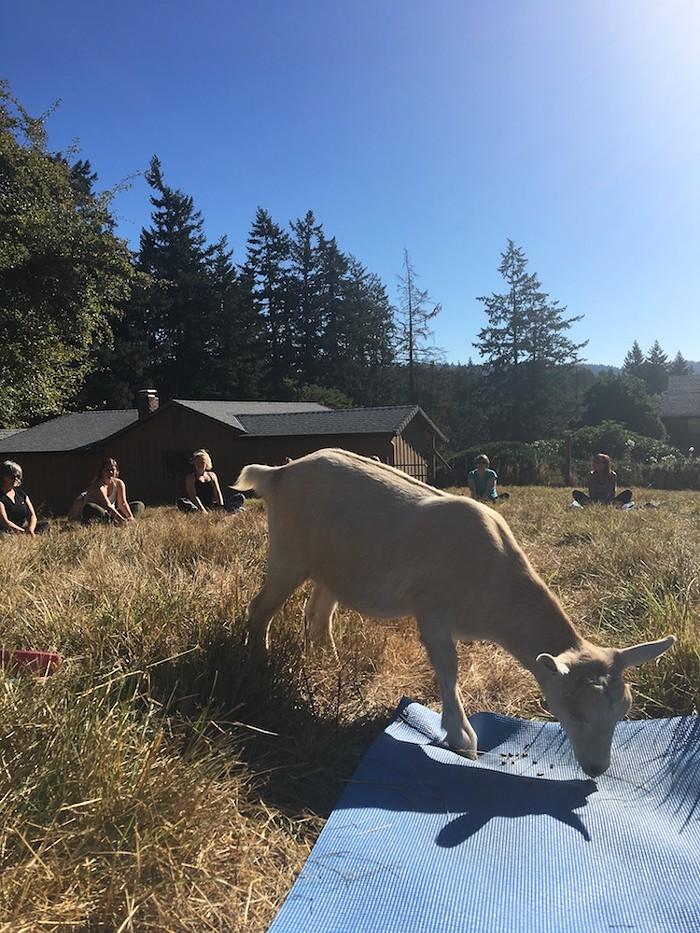 goat_Big_Heart_Farm2.jpg