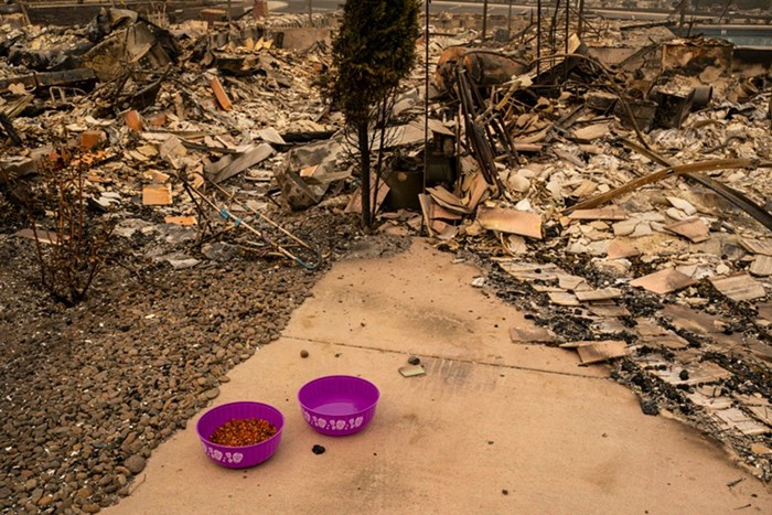 Two pink bowls filled with dog food and water sit in front of a burned down building.