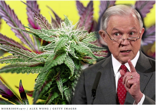 JEFF SESSIONS: Likes to scold pot plants.