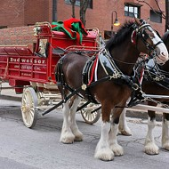 The Budweiser Clydesdales Aren't In This Year's Super Bowl Commercial. Here's Why.