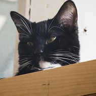 Mauhaus Celebrates 100th Adoption — and 16 Months as a Cat Cafe
