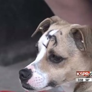 Good Dog Vandalized with Swastika by Bad People