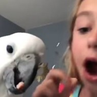 Lake St. Louis Girl's Cockatoo Pulls Loose Tooth in Viral Video
