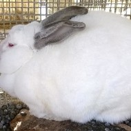 252 Rabbits, Goats, Chickens, Cats, Dogs and a Duck Rescued from Filth, Abuse in St. Clair