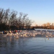 VIDEO: Gang of Flying Asian Carp Mount Aerial Attack on Washington University Rowing Team