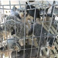 "Missouri Has the Most ""Problem Puppy Mills"" in the U.S., Humane Society Says"