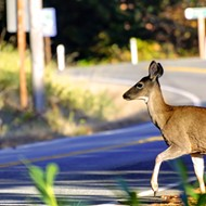 More Missouri Drivers Will Hit Deer This Fall