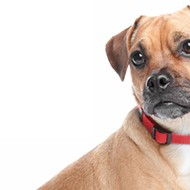 Do it Doggy Style This Valentine's Day With the APA's Weekend Fostering Program