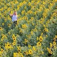 Those Instagram-Famous Sunflower Fields Bloom Again Soon in St. Louis