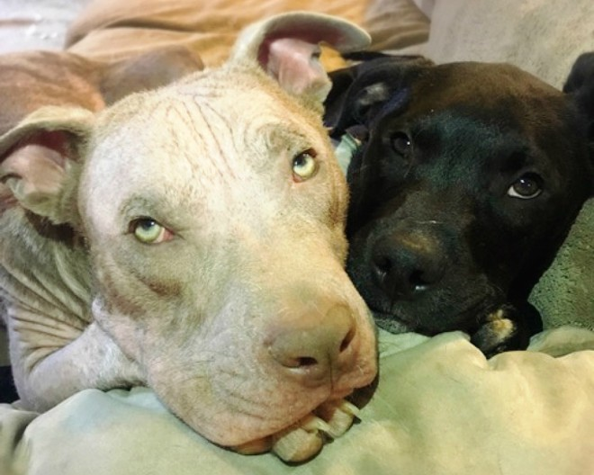 Snuggle time. - PHOTO BY CARLOS' FOSTER MOM MANDY MANKIN