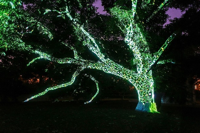 Flora Borealis is the combination of living things and virtual reality. - (C) WESLEY SCHAEFER/MISSOURI BOTANICAL GARDEN