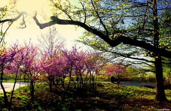 """SPRING IN THE PARK"" BY ANTONIA QUEST VIA FLICKR"