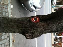 peat_tree_2.jpg