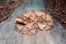 Get this mf snake out of my mf potting soil bag - IMAGE VIA