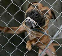 It's not the humane society's fault if your adopted pup turns into a vicious attack dog, the Missouri Court of Appeals says. - VIA WWW.ZIFFLAW.COM