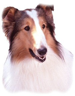 Lassie would be so proud.