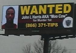 Moo Cow found. - VIA