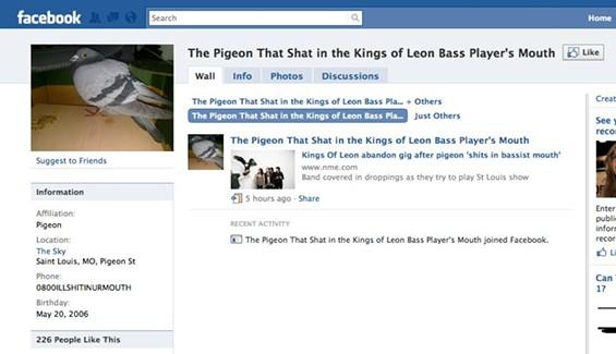 kingsofleonpigeonfacebook.JPG