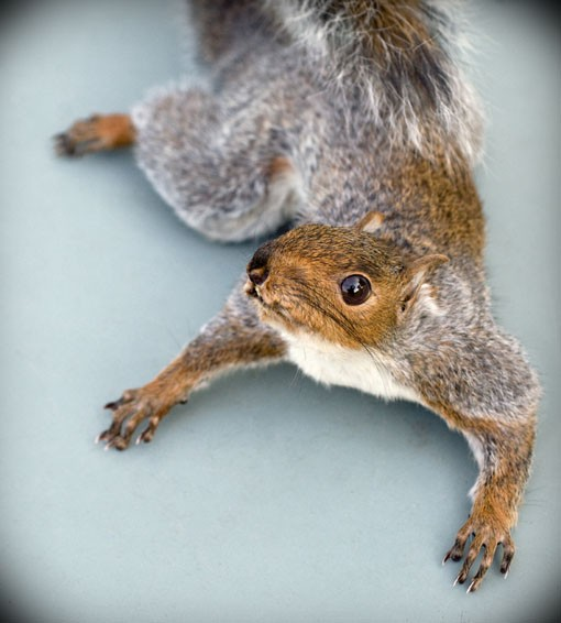A lifelike pose that's popular with collectors of taxidermy. See more photos here. - PHOTO: JENNIFER SILVERBERG