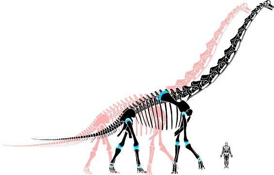 The pink skeleton is our old view of dinosaurs. The black skeleton is the new, improved version; the blue represents the extra cartilage. - IMAGE VIA