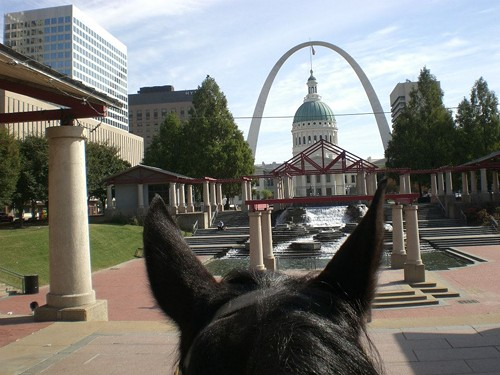 A St. Louis Park Ranger's view through the ears of Ezzy the horse. - ST. LOUIS RANGERS ON FACEBOOK