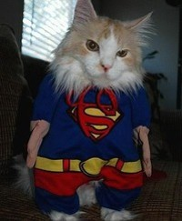 Cats are super. - IMAGE VIA