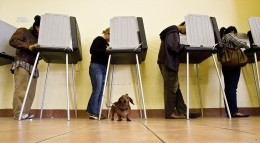 Canine Americans are not allowed to vote. - IMAGE VIA