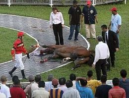 An injured racehorse (though not Apt to Dance). - IMAGE VIA