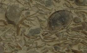 The fossils up close. - IMAGE VIA